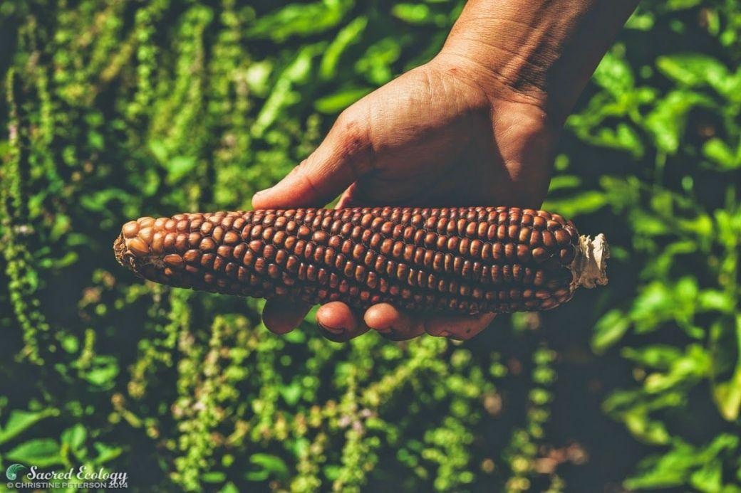 Sacred_Ecology_Sierra_Seeds_IMG_9114